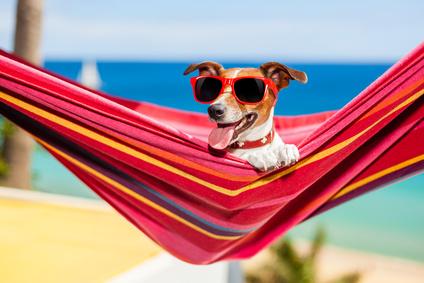 Bildresultat för sommarlov bilder